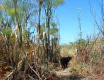 Project Bay Cat Visit