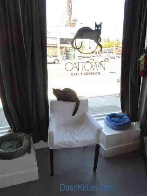 San Francisco Cat Town Oakland