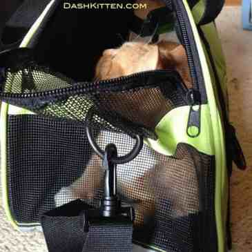 Pet Carrier Photographs Marsboy