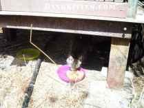 Projecy Bay Cat