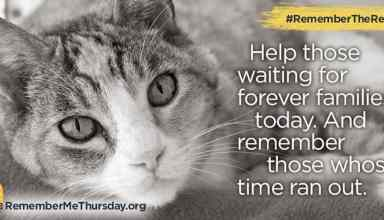 remembertherescue remembermethursday