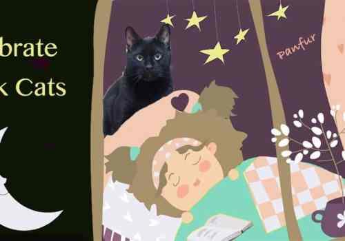 Black Cat celebration