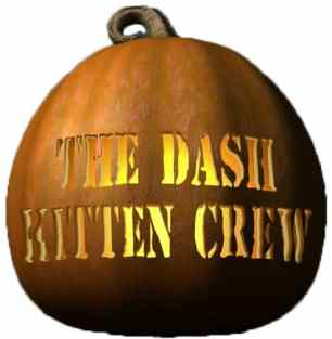 dash-kitten-crew-copy