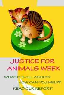 Justice for Animals Pin