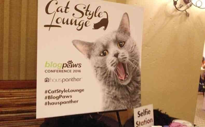 BlogPaws Cat Lounge 2016