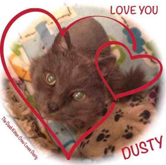 Dusty Health Update