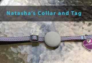 Tabcat Tracker collar and tag