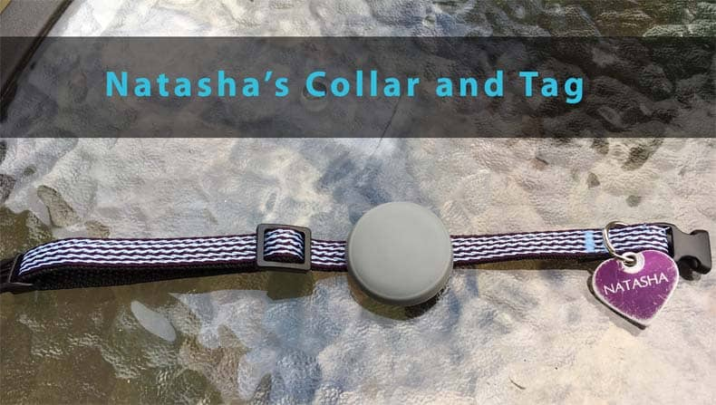 Tabcat Tracker collar and tag
