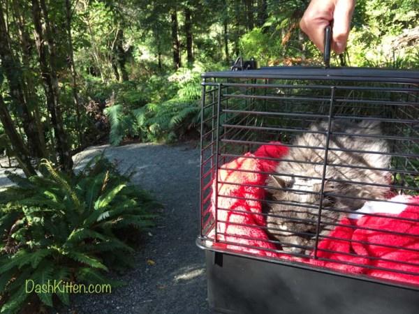 Cute Dusty Cat visits Rivendell