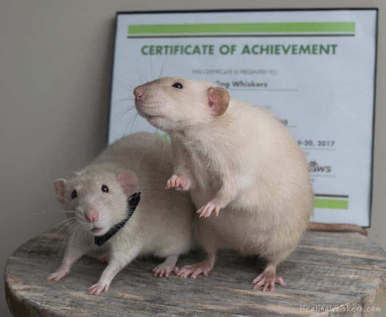 Meet Healing Whiskers Blog