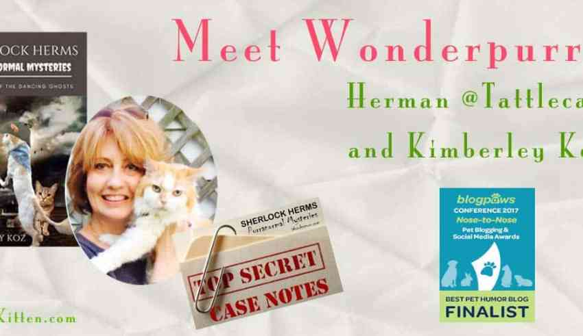 Herman at Wonderpurr