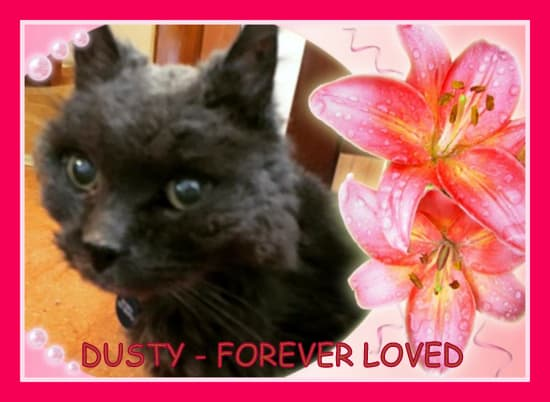 Dusty Memorial picture.