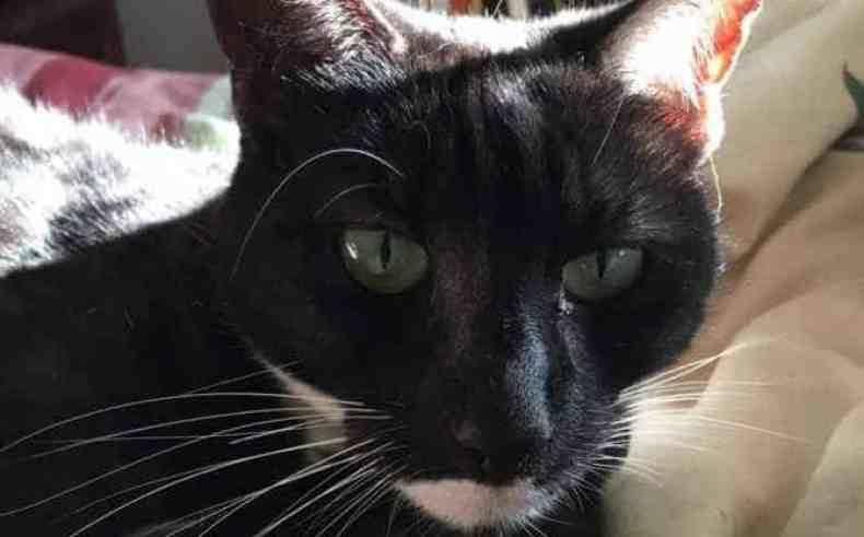A Selfie of Miranda Kitten