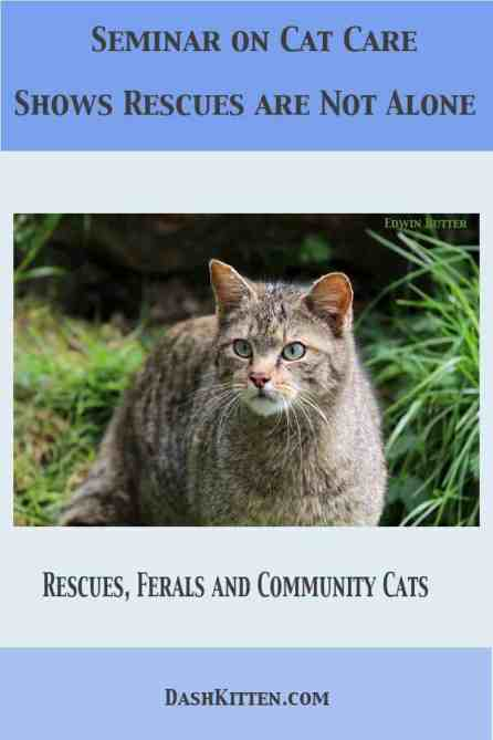 Seminar on Cat Care Shows Rescues are Not Alone. We hear the perspectives of rescues, TNR teams and a vet who speaks on the demise of antibiotics