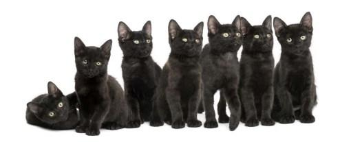 Black kittens sitting