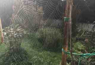 wordless wednesday spider web