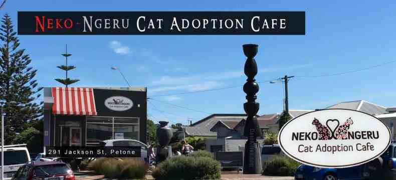 Wellington Cat Cafe