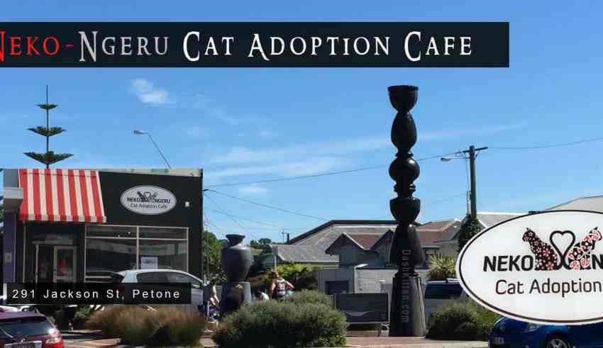 Wellington Cat Cafe
