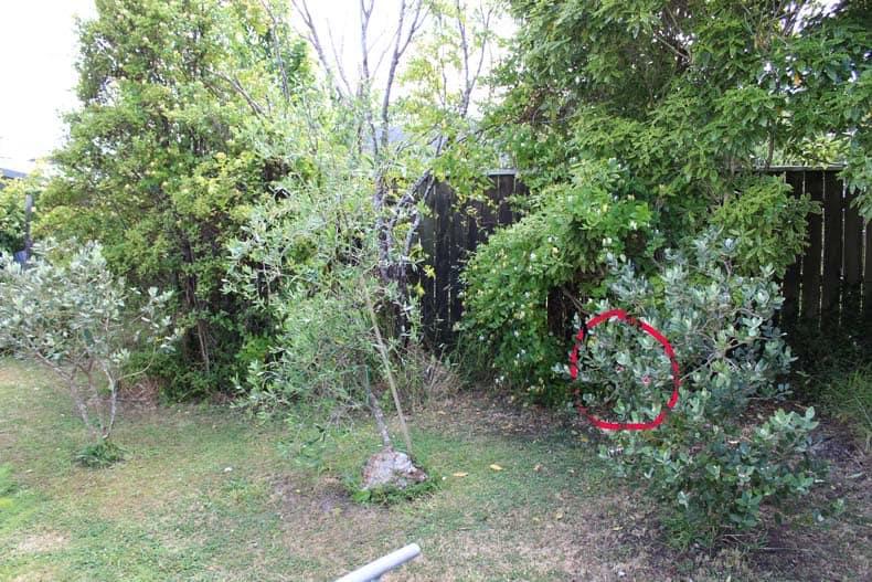 Find the Grasshopper in the Garden