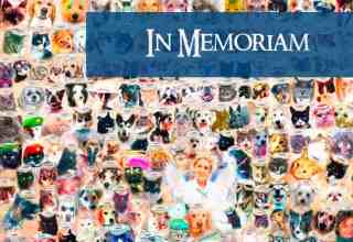 In Memoriam Header