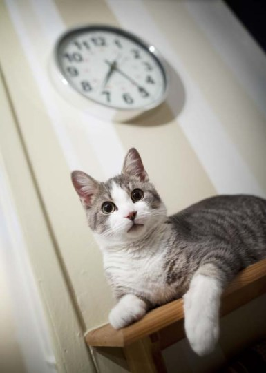Cat time Cat flap post