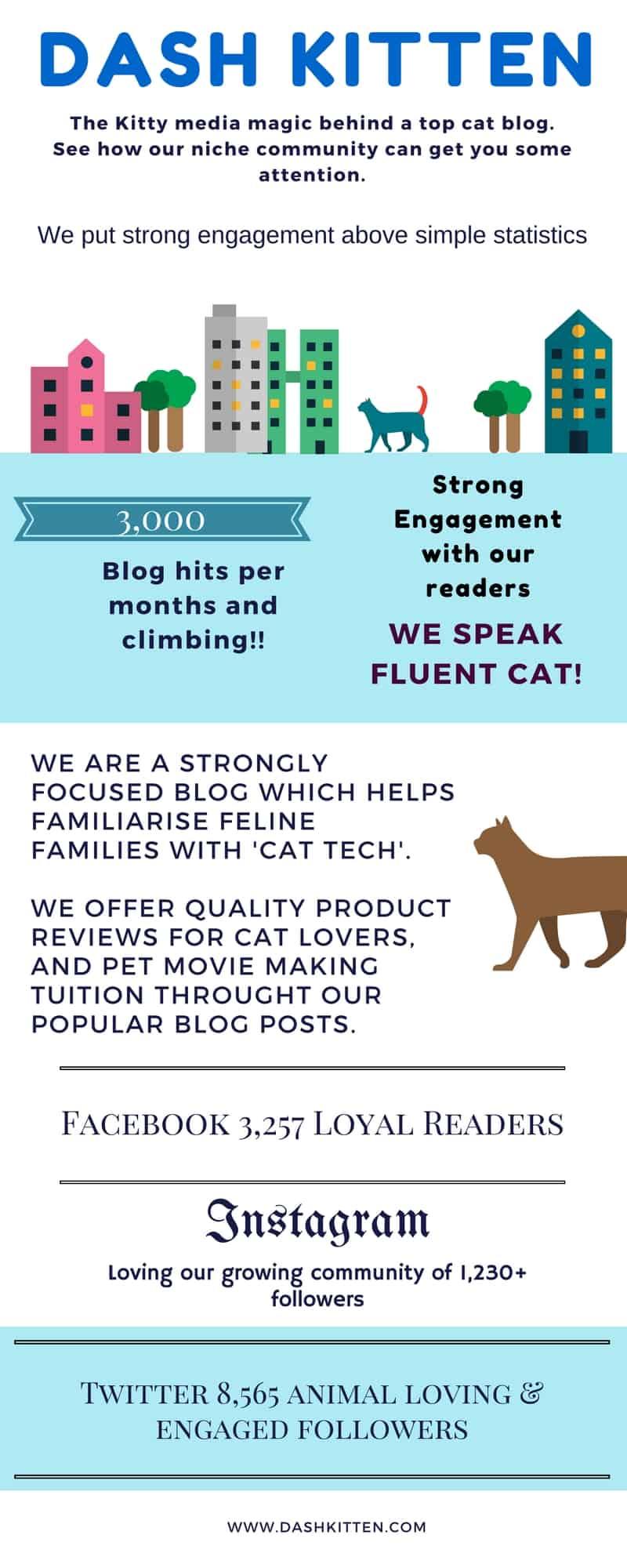 Dash Kitten Blog Media