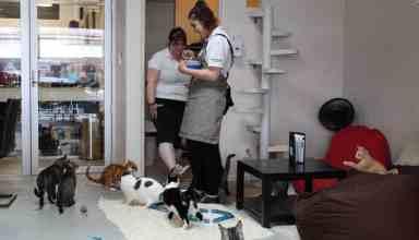 Neko-Ngeru Cat Cafe Feeding Time