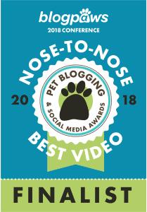 Nose to Nose Awards 2018