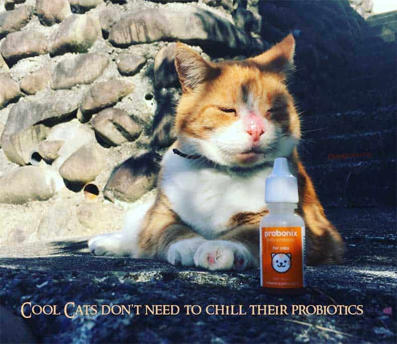 Probonix Probiotics and Jack the Cat