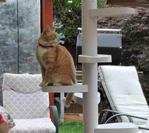 Cat Ladder demonstration image