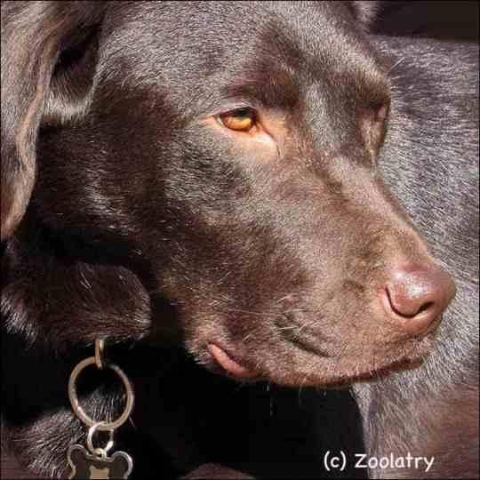 Dougie Pet Close-up