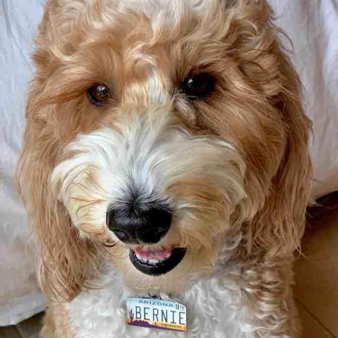 McSquareDoodles Dog close-up Photograph