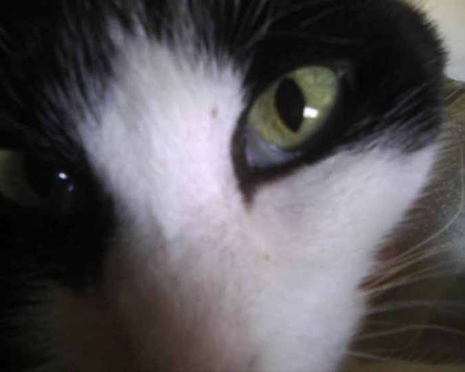 aimable cats blog