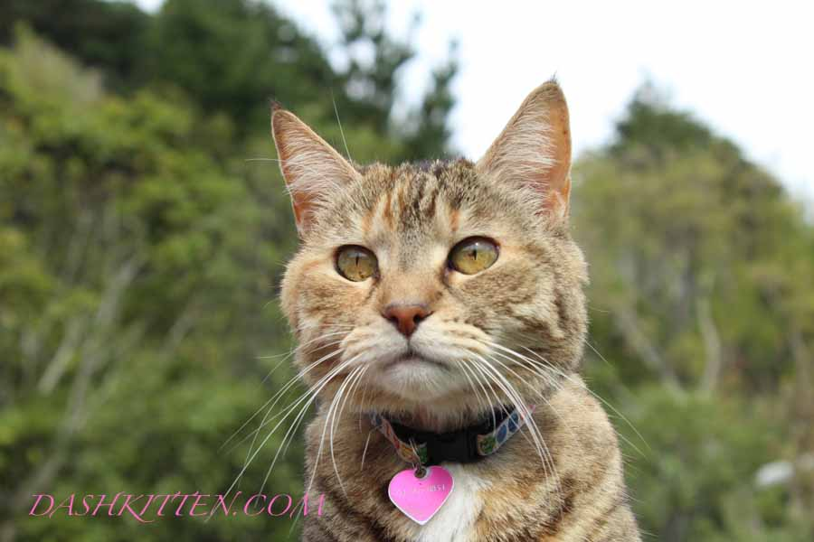 Photographic Portrait of Dot Kitten