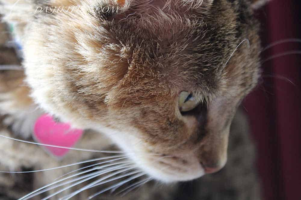 Dot Kitten Closeup Composition
