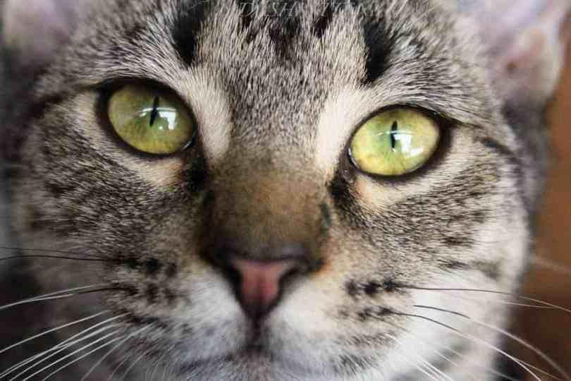 Sage Close-up Cat composition