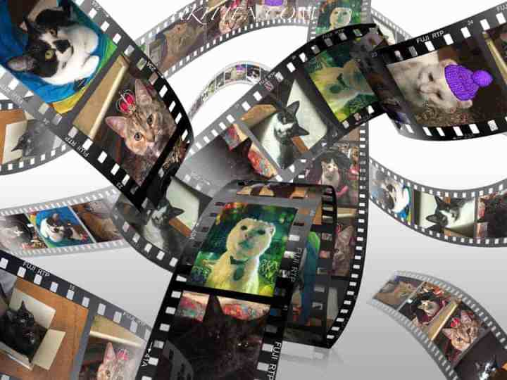 Multiple Collage Film Strip with photographs