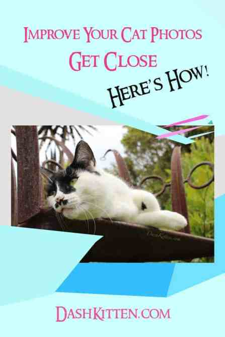 Improve Your Cat Photos Pinterest pin image