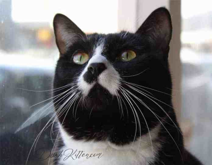 Cute picture of a cat looking upwards, near a window