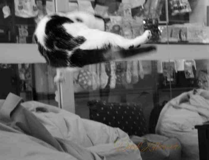 Black and white cat leaping. Monochrome camera settings