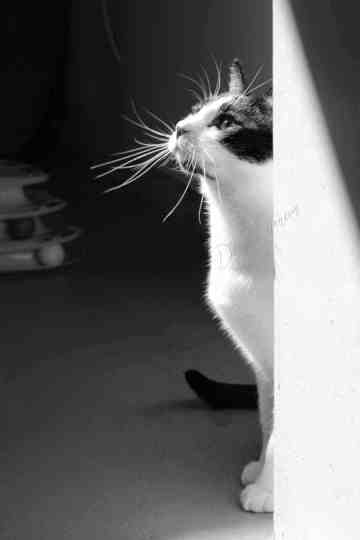 Black and white portrait of a cat