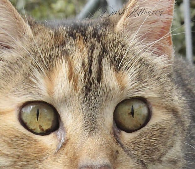 Take a Sharper Cat Photo