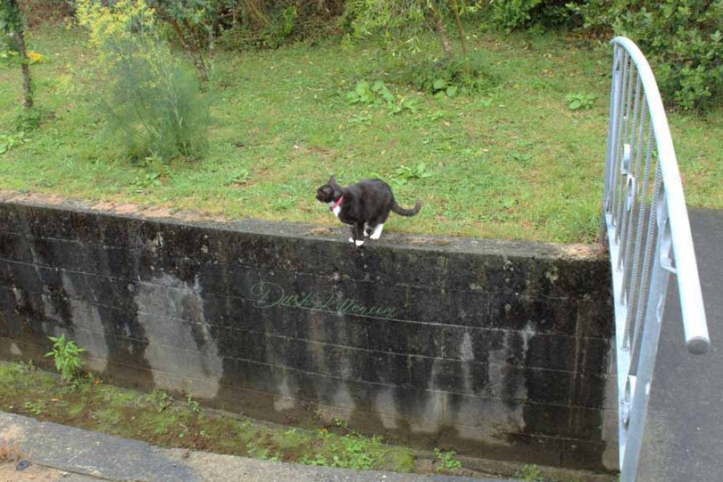 Cat Photographed before it leaps over a stream