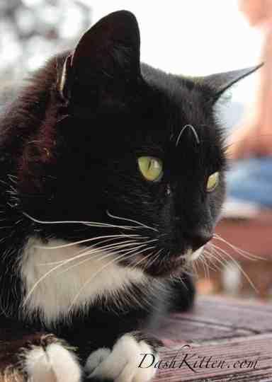 Cat closeup that needs a reflector to improve it.