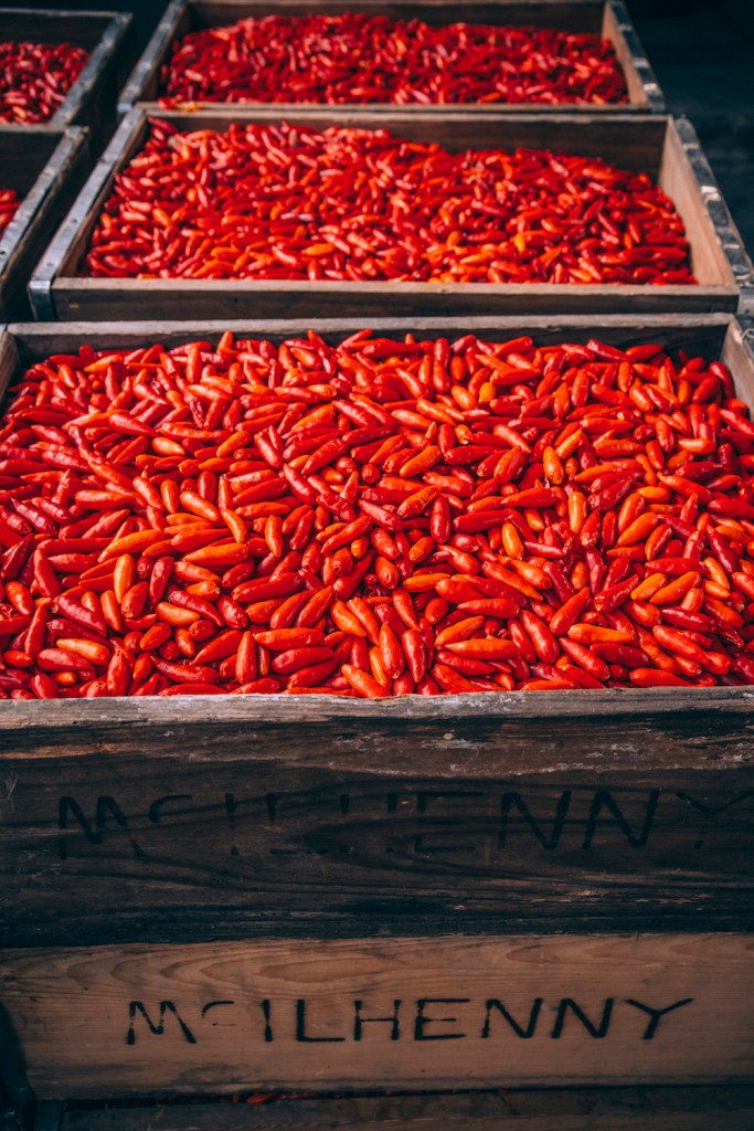 TABASCO_Pepper-Harvest_00016