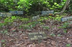 Monkey cemetery, Boabeng-Fiema monkey sanctuary, Ghana
