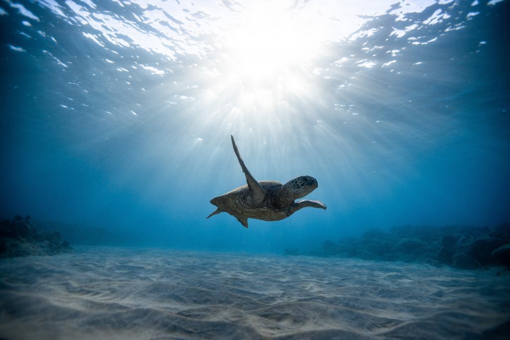壁紙の頭蓋骨,ウミガメ,水中の世界,泳ぐ,オーシャンHD:ワイドスクリーン:高精細:フルスクリーン