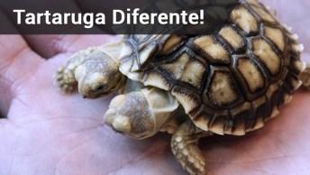 Tartaruga Nasce Com Duas Cabeças, Incrível!