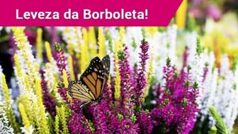 Lindas Borboletas Voando Sobre As Flores!