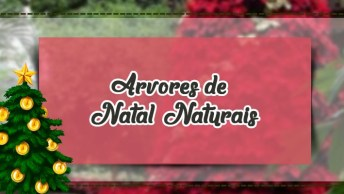 Arvores De Natal Naturais, Com Flores Vermelhas Lindas, Confira!